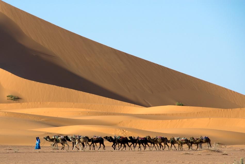 A piece of fine art art photography titled Desert Caravan by Jure Oblak