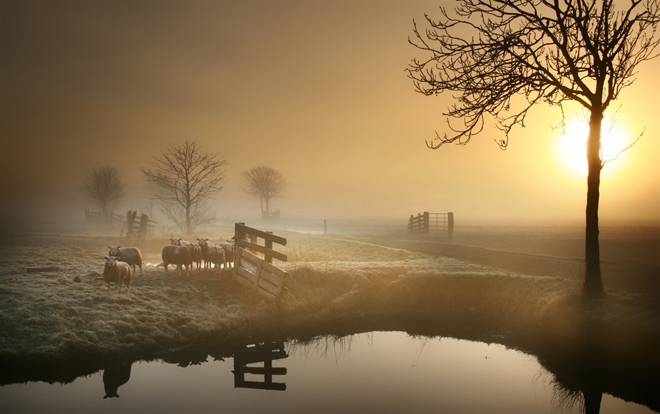A piece of fine art art photography titled Sheep In the Morning by b.neeleman