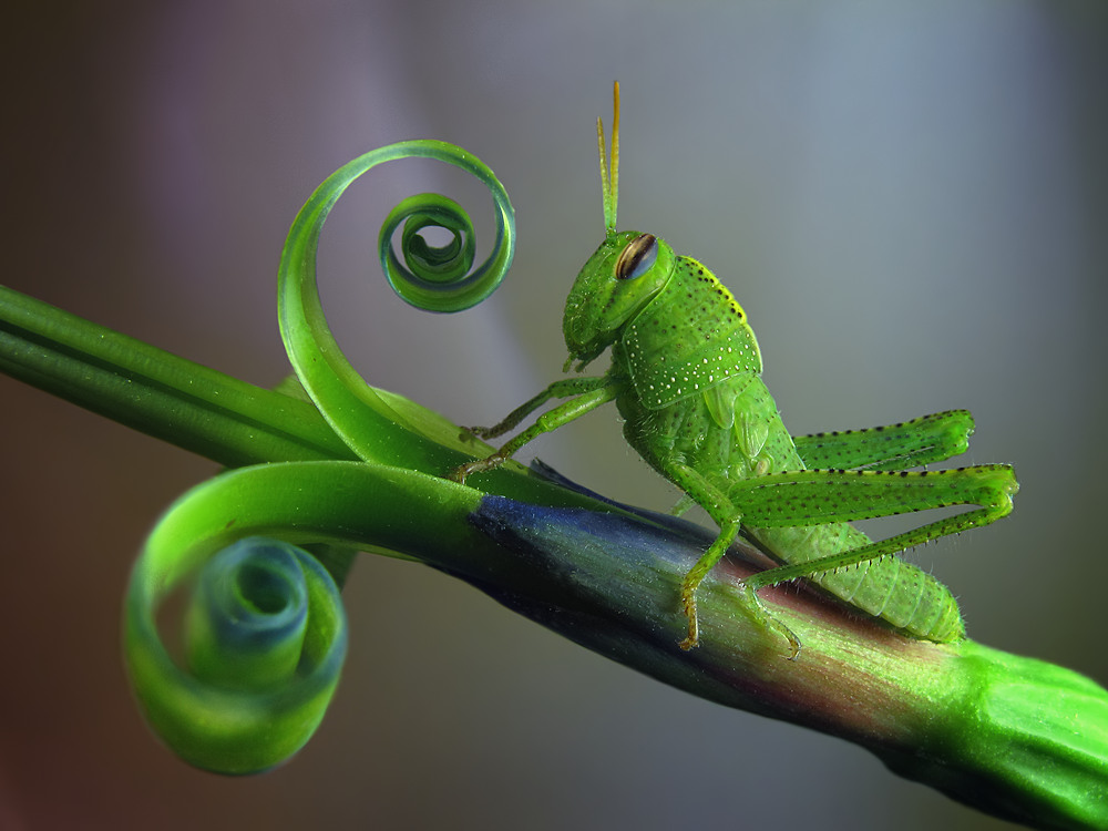 A piece of fine art art photography titled Saltamontes by Jimmy Hoffman