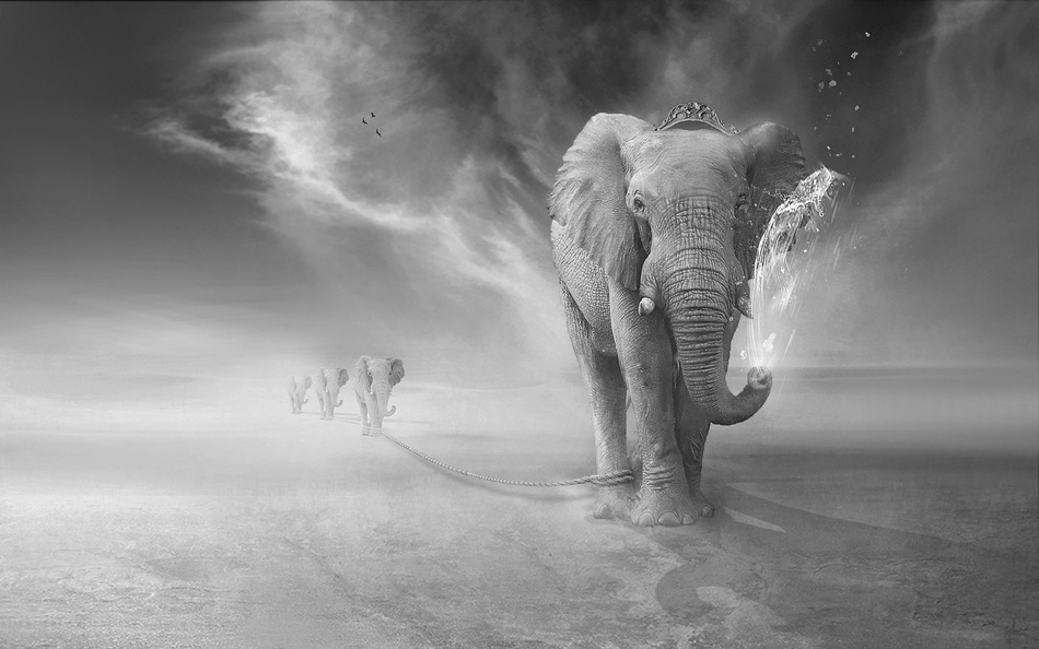 A piece of fine art art photography titled Elephants Trip by sulaiman almawash