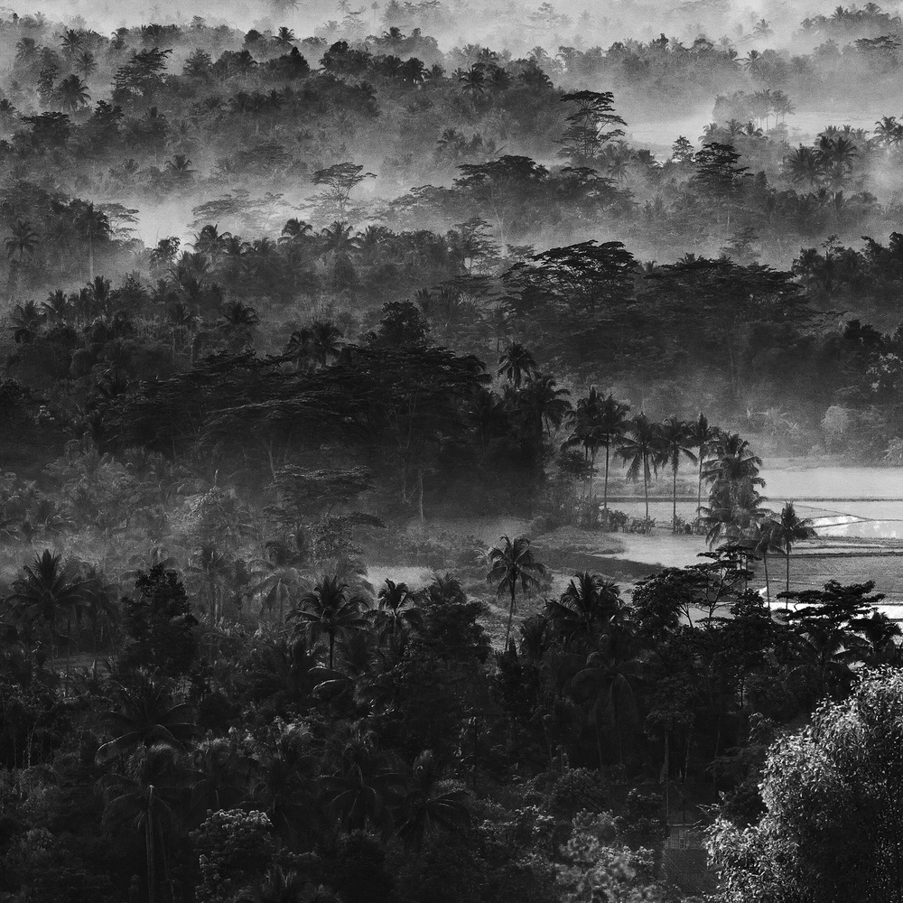 A piece of fine art art photography titled Mist In the Morning by Johanes Januar