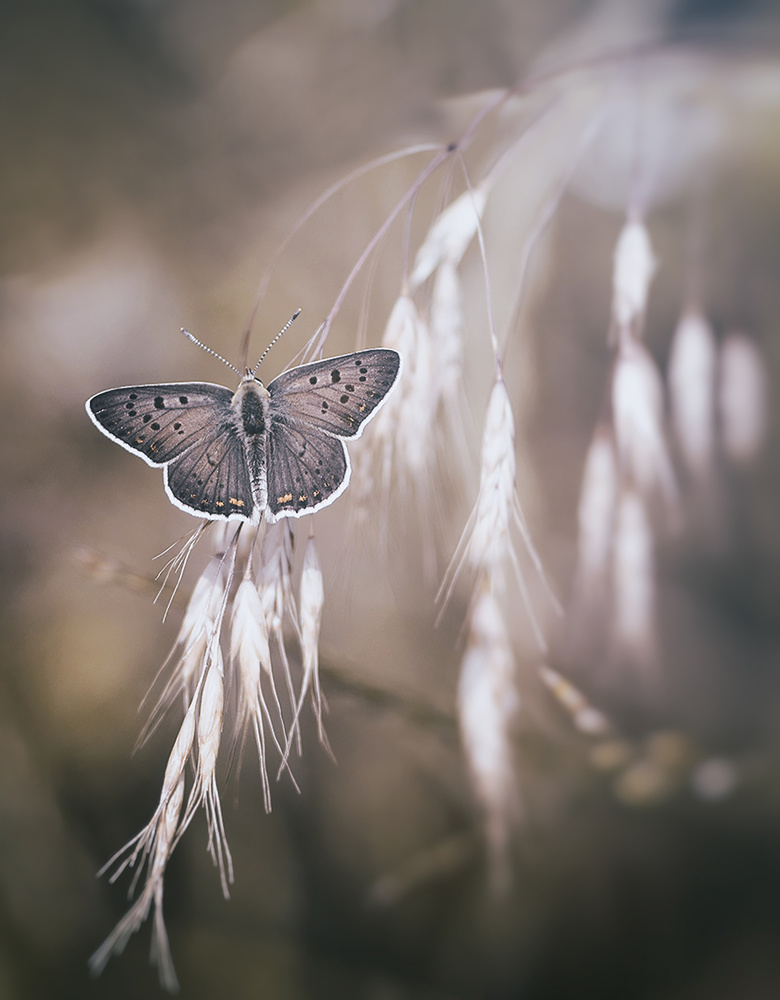 A piece of fine art art photography titled A Quiet Butterfly by Dragana Trajkovic