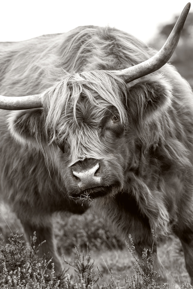 View this piece of fine art photography titled The Bull by Fahmi Bhs