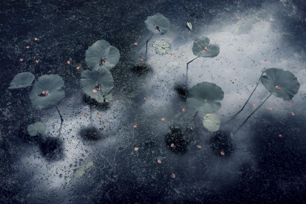 A piece of fine art art photography titled Plant In the Galaxy by Ekkachai Khemkum