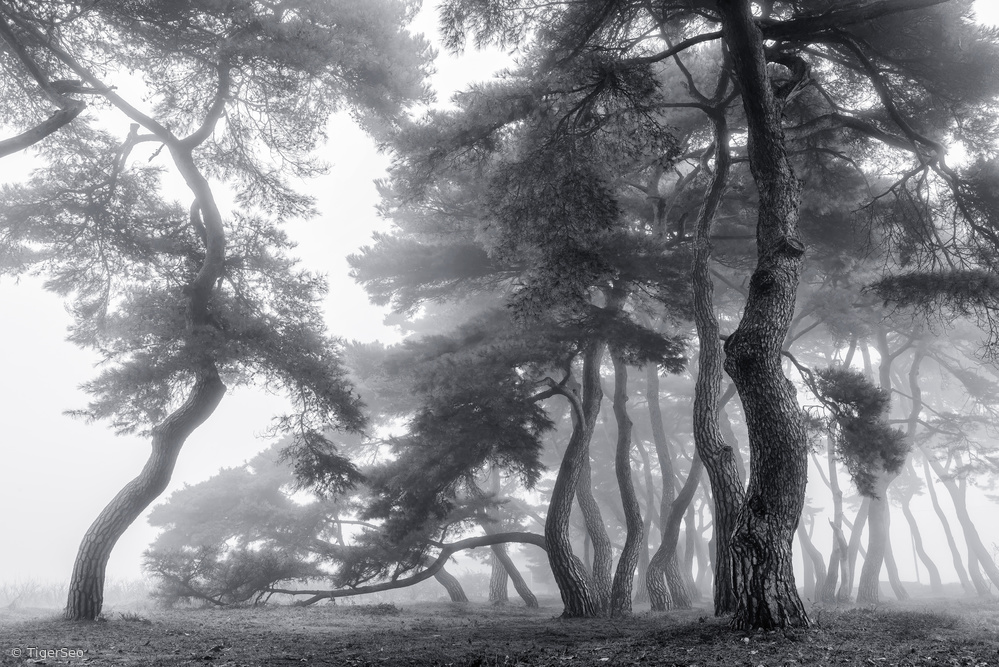 View this piece of fine art photography titled Endure for a hundred years by Annie Poreider