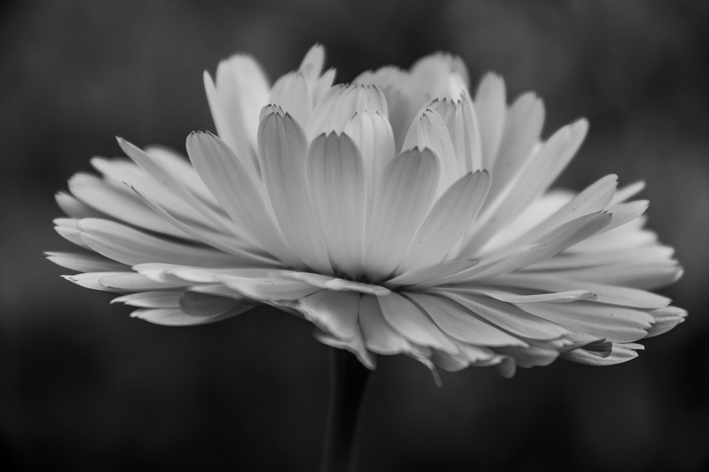 A piece of fine art art photography titled Bloom! by Cool Clicks