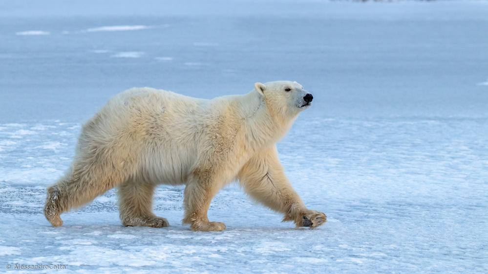 Walking On Iced Lake