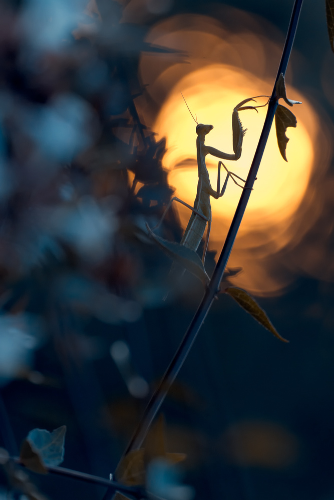 A piece of fine art art photography titled Light Is Life by Fabien BRAVIN
