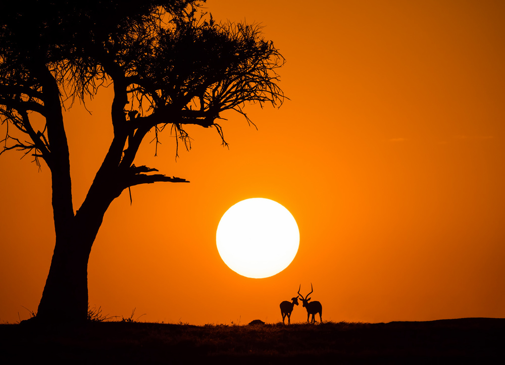 A piece of fine art art photography titled African Sunset by Jonathan Zhang