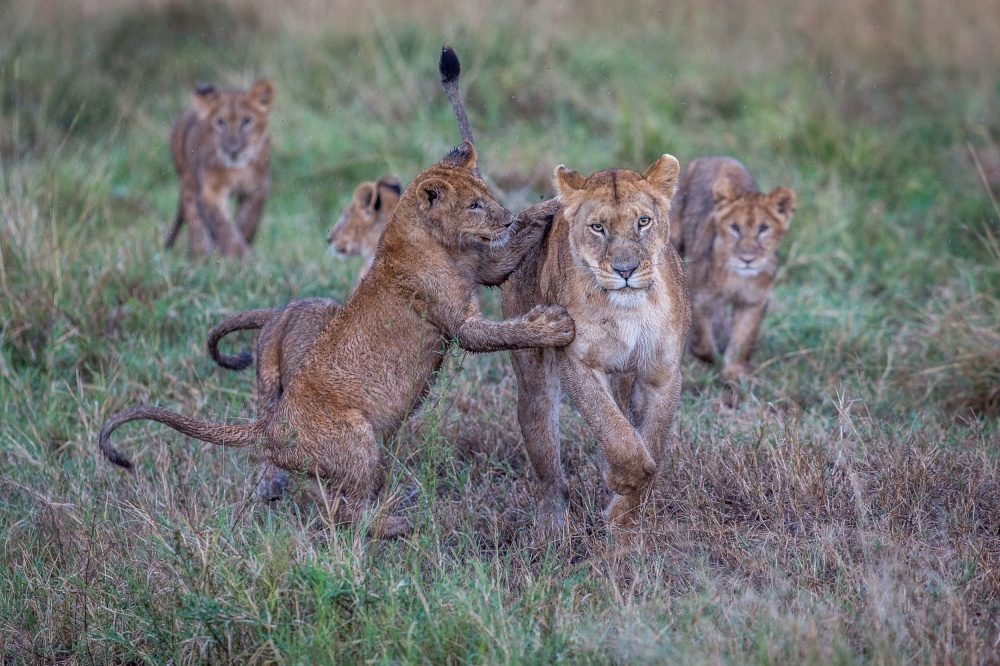 A piece of fine art art photography titled Schools Out - Let's Play by Jeffrey C. Sink