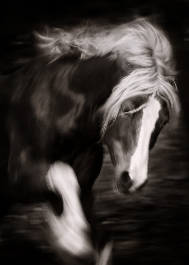 A piece of fine art art photography titled Fury by Cristy Cumberworth