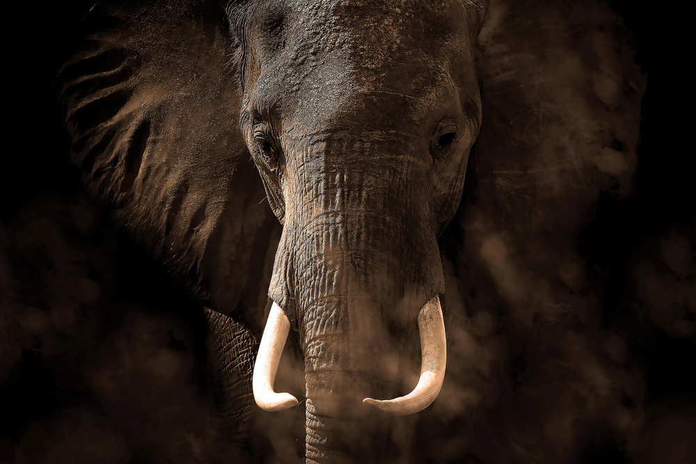 A piece of fine art art photography titled Tusker by Bjorn Persson
