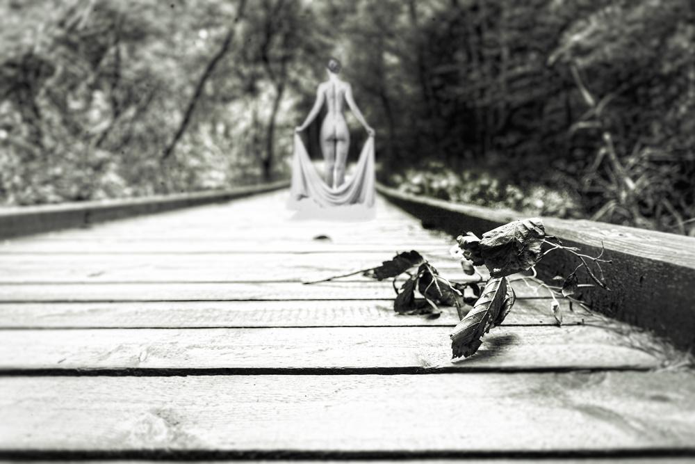 A piece of fine art art photography titled Fallen Leaf by Markus Huber