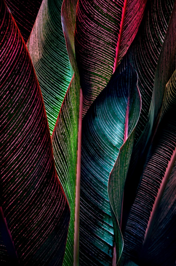 A piece of fine art art photography titled Backlit Fronds by Jody Miller