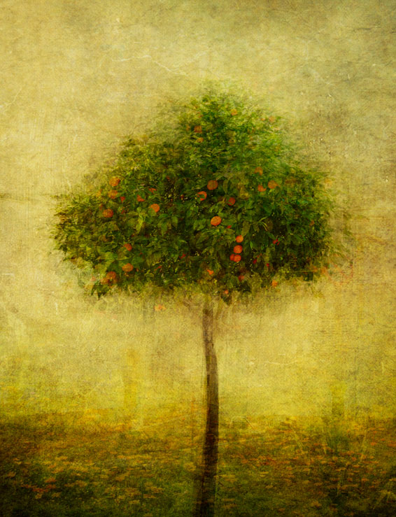 A piece of fine art art photography titled 1035 *orange Tree* by anduci