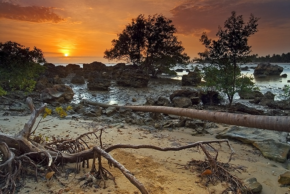 A piece of fine art art photography titled Manguezal at Sunrise by Marcio Cabral