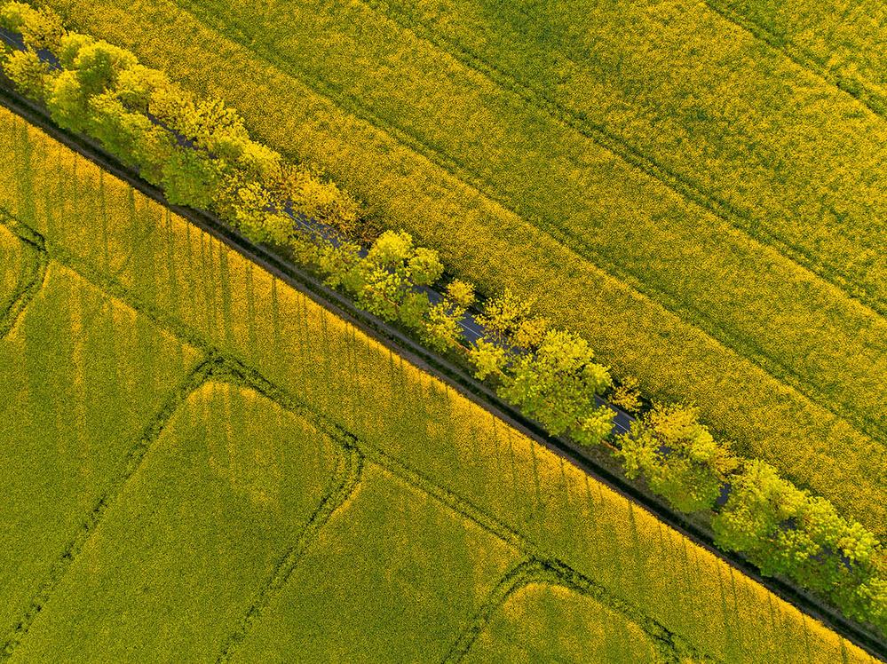 A piece of fine art art photography titled Through the Fields by keller