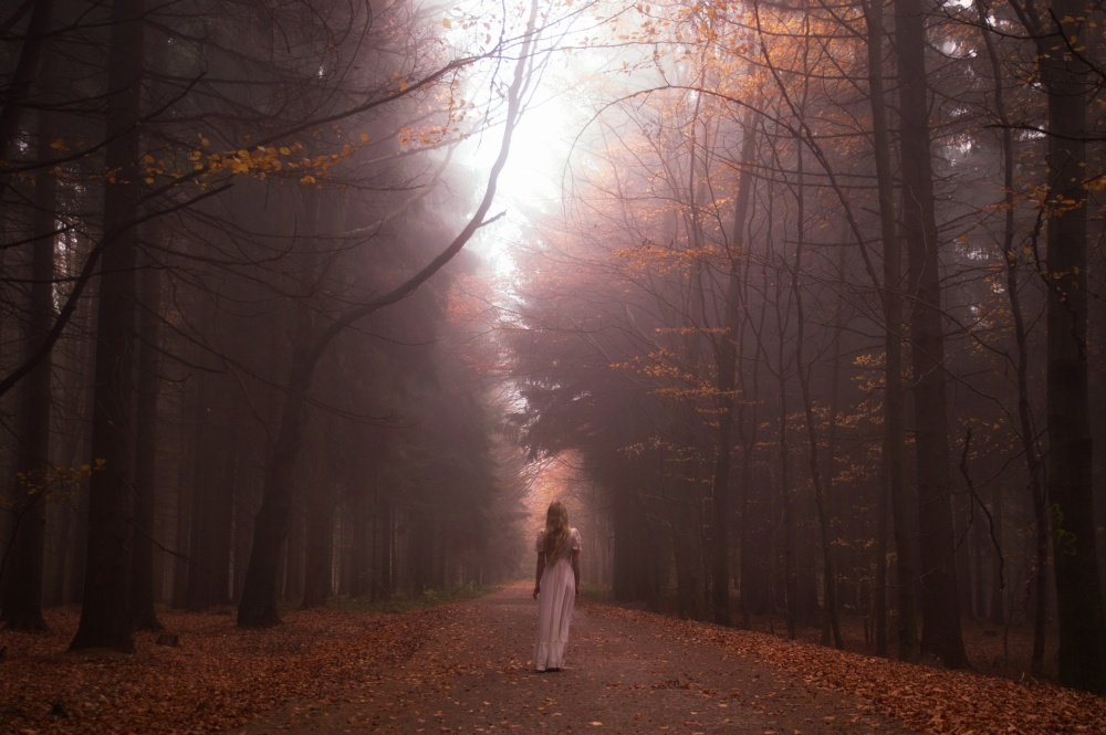 A piece of fine art art photography titled My Autumn Forrest by Gabriela Slegrova