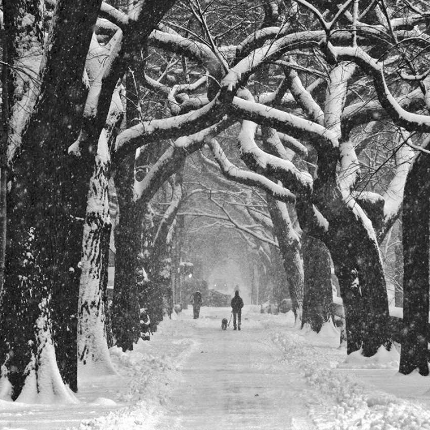 A piece of fine art art photography titled 5th Avenue, Snowstorm by bambamphoto