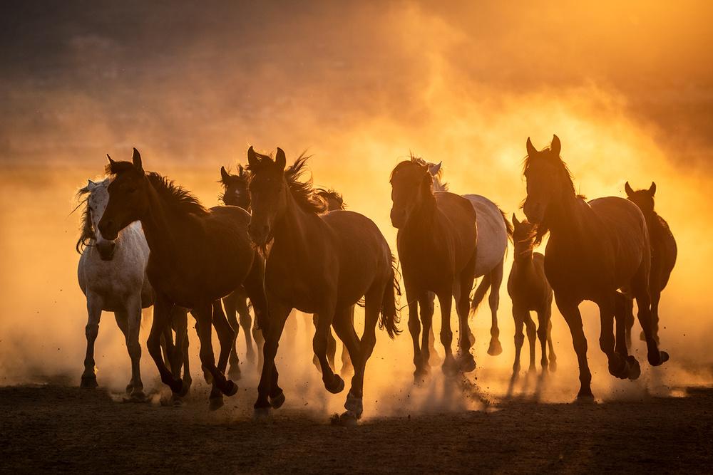 Cappadocia Horses