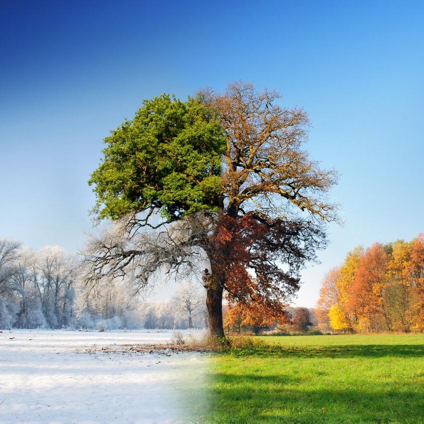 A piece of fine art art photography titled 4 Seasons by Adam Brzuszek