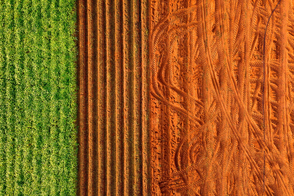 A piece of fine art art photography titled Carpet by Alon jacobi