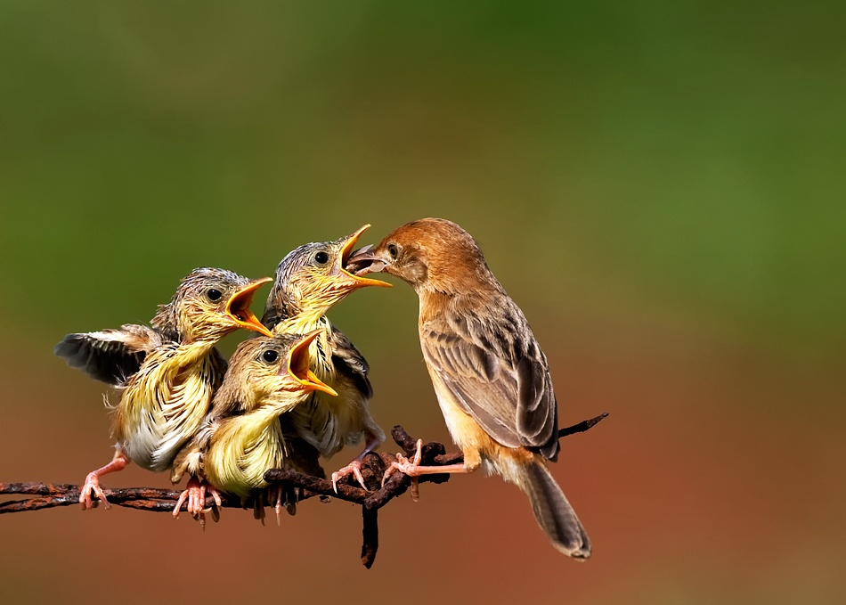 A piece of fine art art photography titled Feeding Time by Octavianus Darmawan