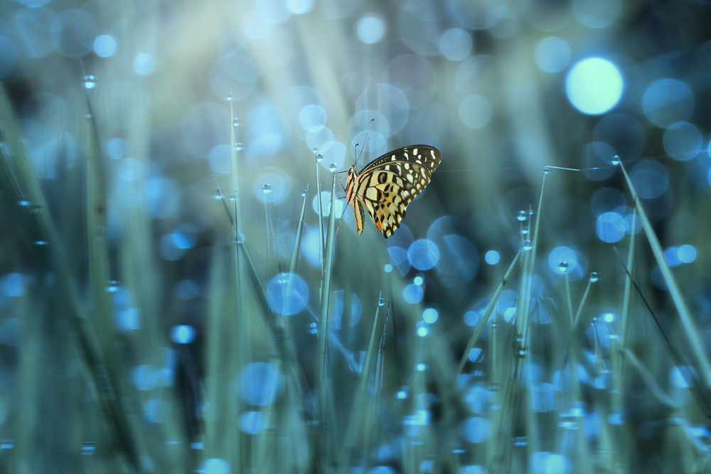 View this piece of fine art photography titled Butterfly by Ridho Arifuddin