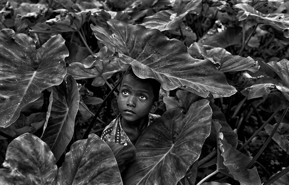 A piece of fine art art photography titled Shelter by Avishek Das