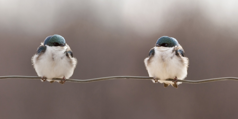 A piece of fine art art photography titled Birds On a Wire by Lucie Gagnon