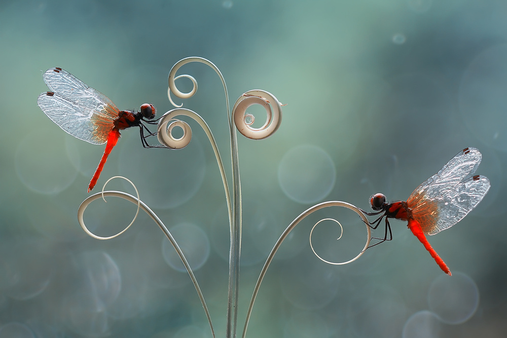 A piece of fine art art photography titled The Beauty of a Small World by Abdul Gapur Dayak