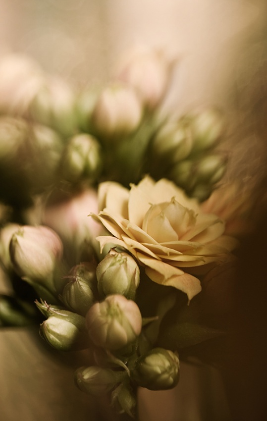 A piece of fine art art photography titled Flowers by Siv Wester