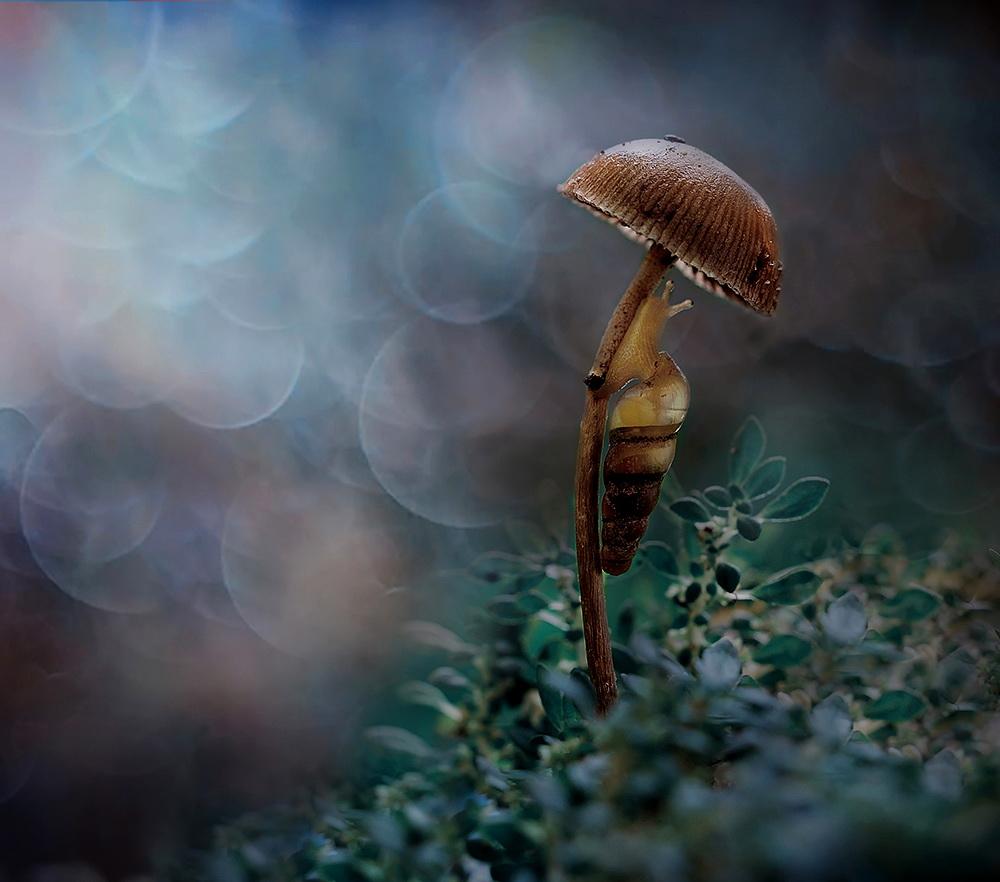 A piece of fine art art photography titled Umbrella Girl by M.Yulian Amin
