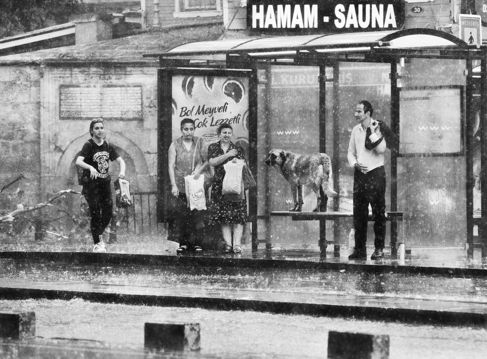 A piece of fine art art photography titled Rain by kadir tezel