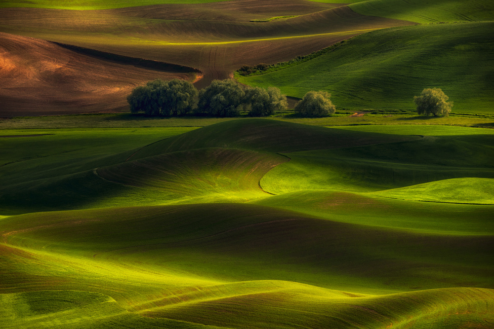 A piece of fine art art photography titled Spring In the Palouse by Lydia Jacobs
