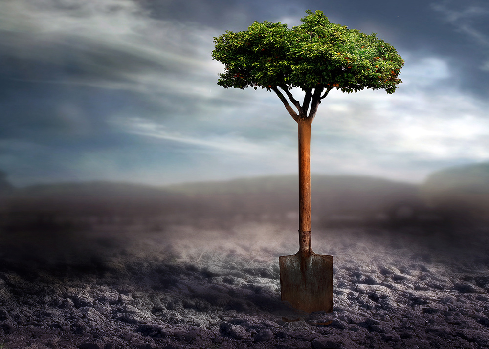 A piece of fine art art photography titled Plant a Tree by Ben Goossens