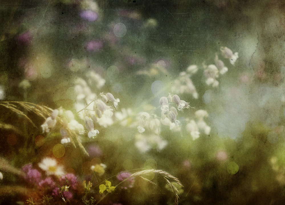 A piece of fine art art photography titled Summercolors by Stefan Eisele