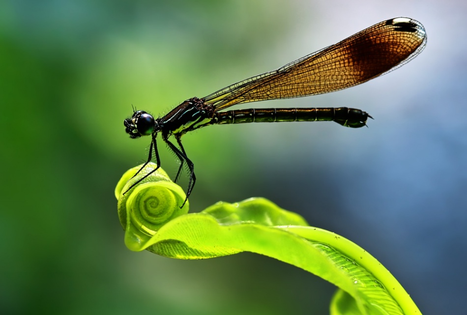 A piece of fine art art photography titled Perch by Andiyan Lutfi