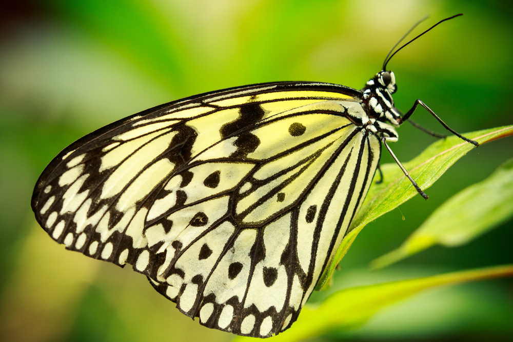 A piece of fine art art photography titled Paper Kite Butterfly by Francois Roughol