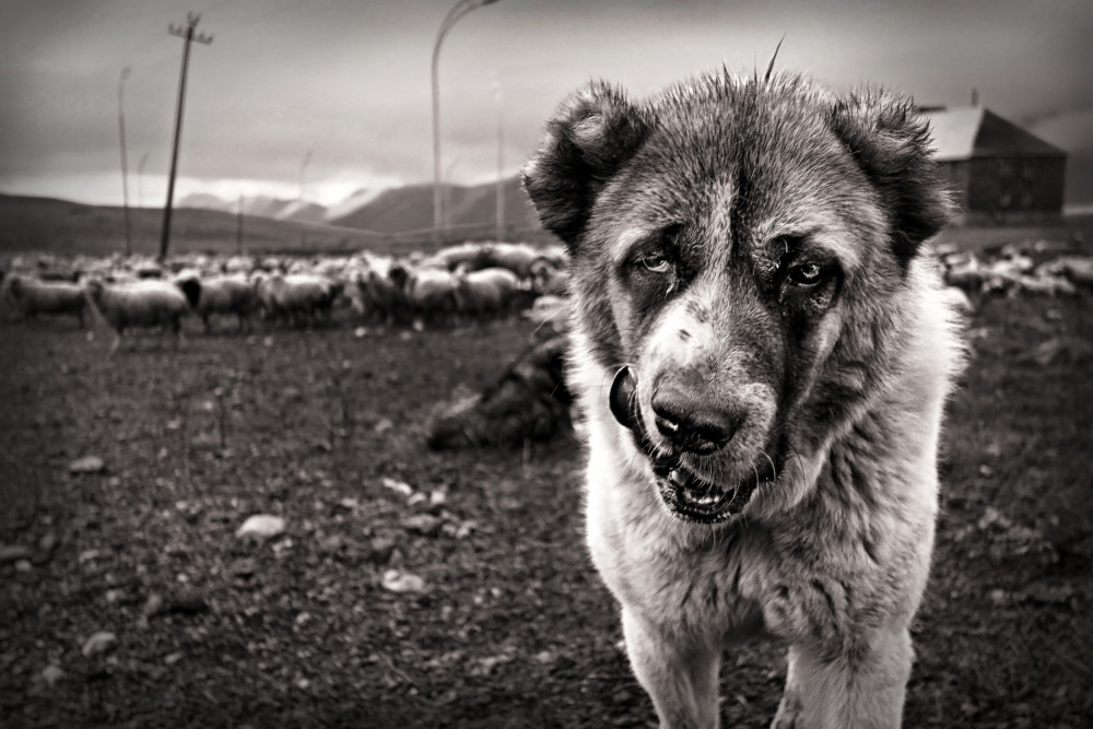 A piece of fine art art photography titled My Territory by Eyal Bussiba
