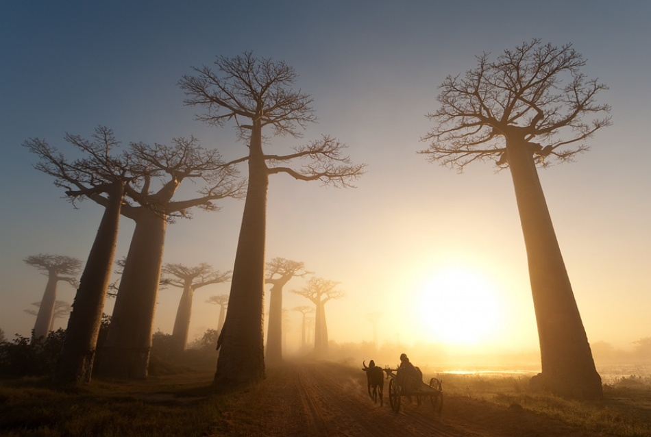 A piece of fine art art photography titled Oxcart by Marsel van Oosten