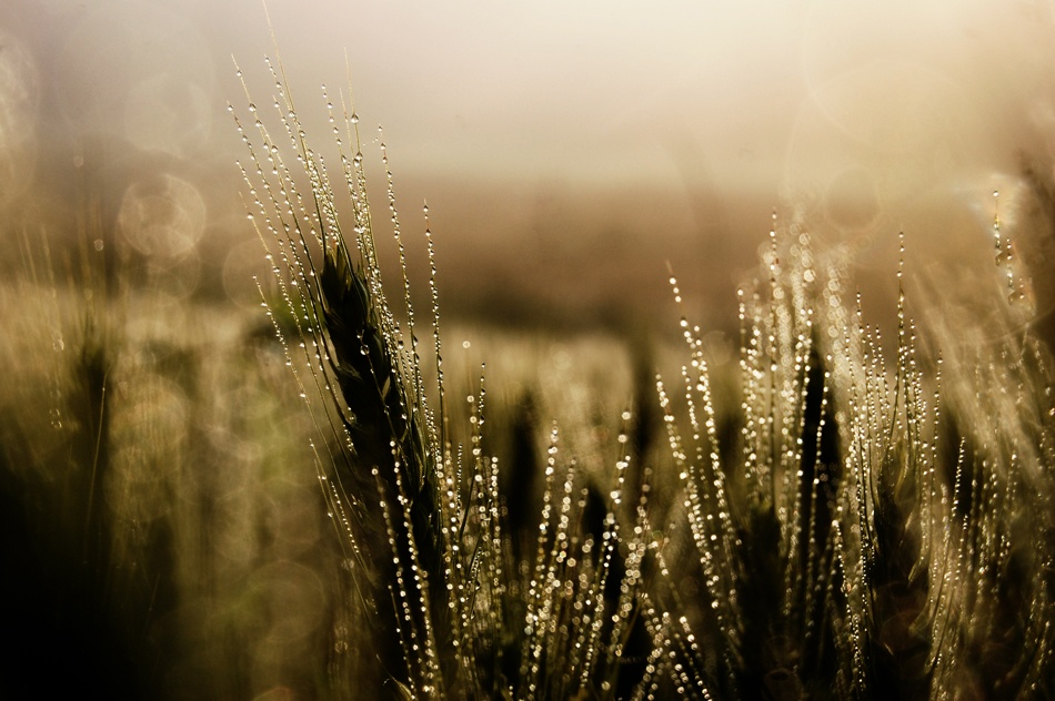 A piece of fine art art photography titled   Morning Dew by Barbara