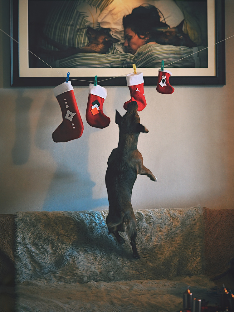 """"""" about Christmas and Dogs..."""""""