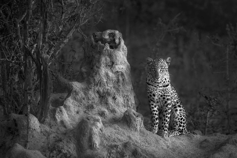 A piece of fine art art photography titled Sabi 2 by Marsel van Oosten