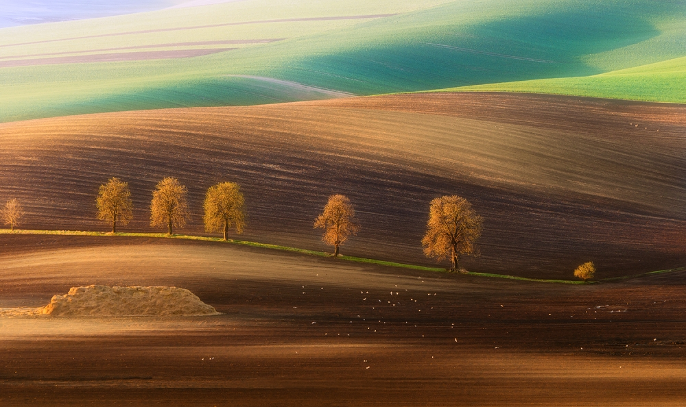A piece of fine art art photography titled Moravian Trees by Piotr Krol (Bax)