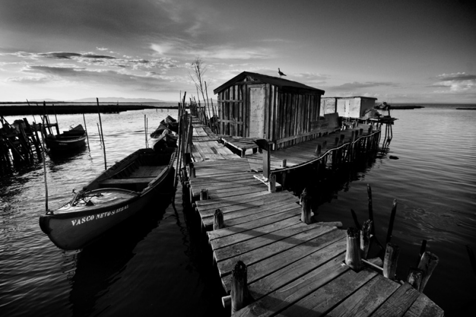 A piece of fine art art photography titled Carrasqueira by Hugo Lopes