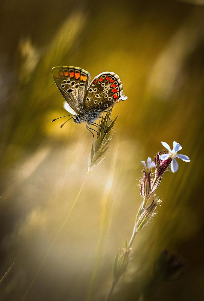 A piece of fine art art photography titled Argus à La Fleur by bonachera jf