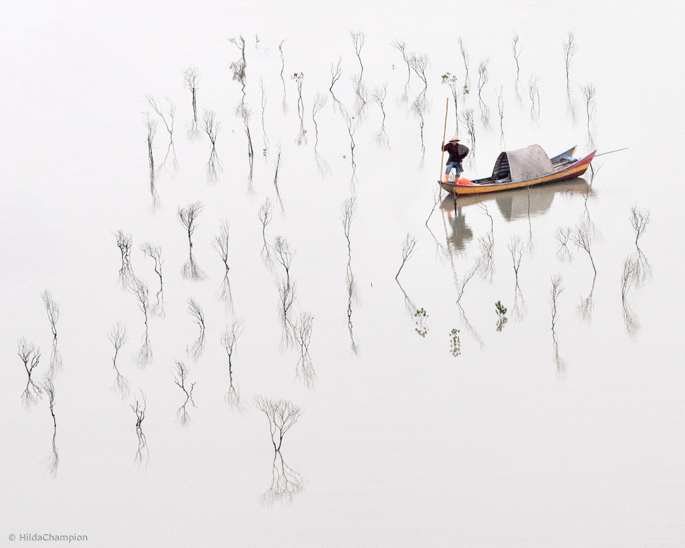 View this piece of fine art photography titled In the Mangroves by Hilda Champion