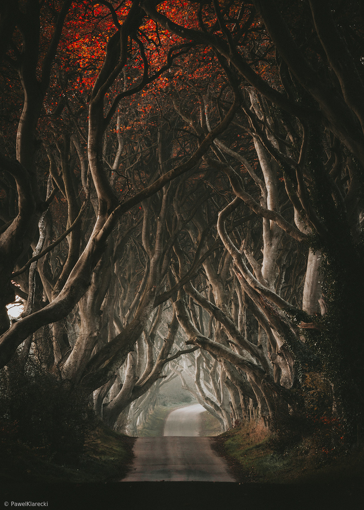 The Night Before - The Dark Hedges
