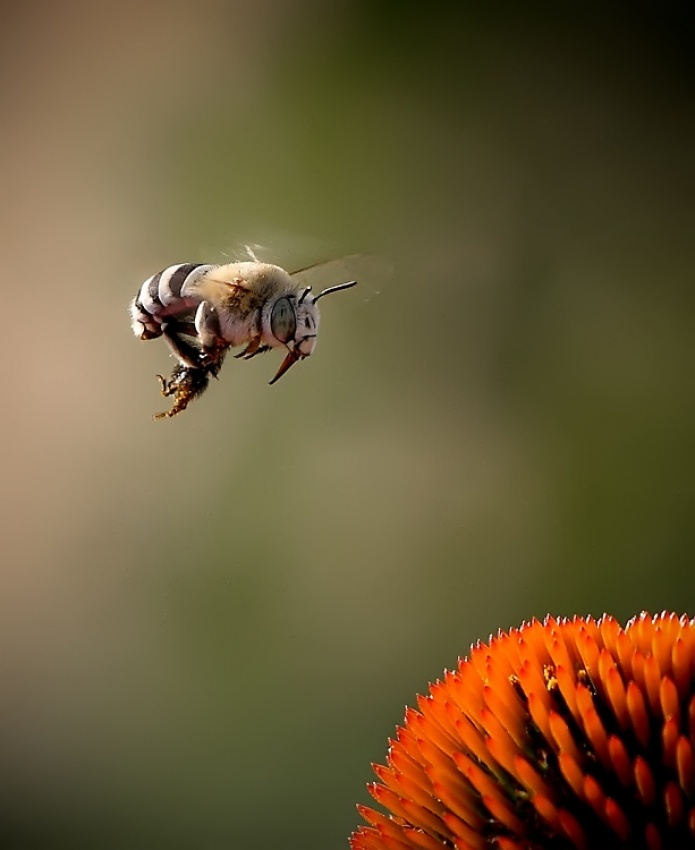 A piece of fine art art photography titled Landing On Flower by Madjid Momeni Moghaddam